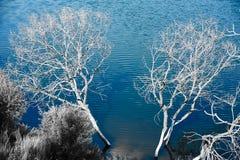 Los árboles muertos en el agua Fotos de archivo