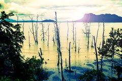 Los árboles muertos en una playa de Sarawak en Borneo por la tarde se encienden Imágenes de archivo libres de regalías