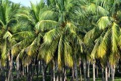 Los árboles naturales hermosos se oponen el fondo capturado de la fotografía de la acción de la India Fotos de archivo