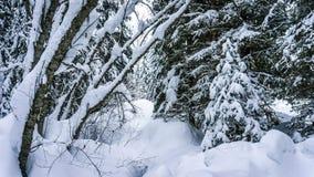 Los árboles nevados y una nieve profunda embalan en el bosque Fotos de archivo libres de regalías