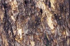 Los árboles pelan retro Imagen de archivo libre de regalías