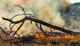 Los árboles que queman del incendio forestal en el verano de 2016 Foto de archivo libre de regalías