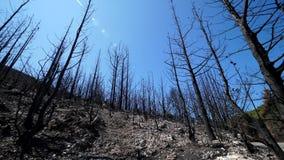 Los árboles quemaron en el disater natural, bosque destruido después del fuego metrajes