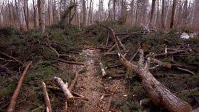 Los árboles redujeron en el taiga Lugar después de cortar árboles almacen de video