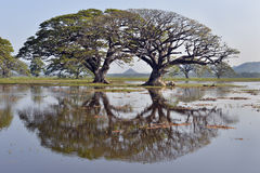 Los árboles reflejaron en el lago Tissa Wewa, Sri Lanka Foto de archivo