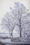 Los árboles se cubren con escarcha en el campo Foto de archivo libre de regalías