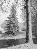 Los árboles se cubren con nieve foto de archivo
