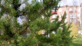 Los árboles se sacuden en el viento en la ciudad durante el día en el otoño