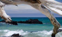 Los árboles secos enmarcan un filón en la playa de Puako, isla grande, Hawaii. Imágenes de archivo libres de regalías