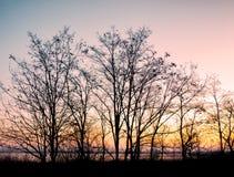 Los árboles siluetean en el fondo de la naturaleza de la puesta del sol Fotografía de archivo libre de regalías