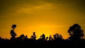 Los árboles siluetean en fondo de la puesta del sol Fotografía de archivo libre de regalías