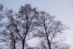 Los árboles siluetean en fondo del cielo Foto de archivo libre de regalías