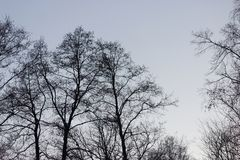 Los árboles siluetean en fondo del cielo Fotografía de archivo