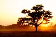 Los árboles siluetean en la puesta del sol imagenes de archivo