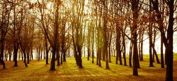 Los árboles siluetean en la puesta del sol Imágenes de archivo libres de regalías