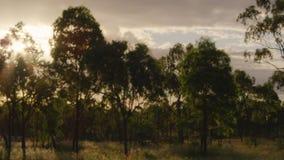 Los árboles siluetean y asolean metrajes