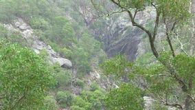 Los árboles sobre cala de los panaderos gorge, cerca de Hillgrove, NSW, Australia almacen de video