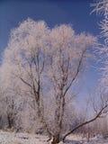 Los árboles son escarcha cubierta Imágenes de archivo libres de regalías