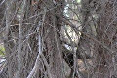 Los árboles son gruesos con las nuevas y viejas ramas que dan el refugio a las criaturas más pequeñas que hacen su hogar en el bo imagen de archivo libre de regalías