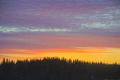 Los árboles Spruce resumen la subida de Sun Fotografía de archivo libre de regalías