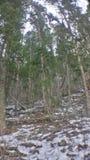 Los árboles suben la colina Fotos de archivo libres de regalías