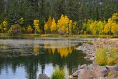 Los árboles tempranos del amarillo del otoño riegan el _2 de la reflexión Foto de archivo