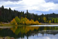 Los árboles tempranos del amarillo del otoño riegan el _3 de la reflexión Fotografía de archivo libre de regalías