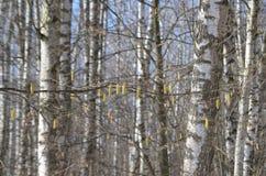 Los árboles tienen sus propias decoraciones fotos de archivo libres de regalías