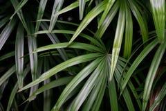 Los árboles tropicales arreglaron en los antecedentes completos o la pared llena allí AR fotografía de archivo