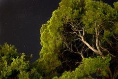 los árboles verdes basan encima de la visión con el cielo nocturno y las estrellas encendido Imágenes de archivo libres de regalías