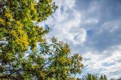 Los árboles y el cielo Fotos de archivo