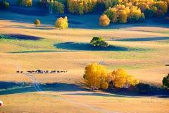 Los árboles y el ganado de la caída en la puesta del sol del pasto Fotos de archivo libres de regalías