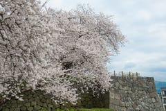 Los árboles y el Kajo de la flor de cerezo de la plena floración se escudan la pared Foto de archivo