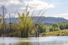 Los árboles y el lago secos con la reflexión en agua en la nación de Thung Salaeng Luang parquean en Tailandia Fotografía de archivo libre de regalías