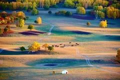 Los árboles y el yurt coloridos en la puesta del sol de los prados Fotografía de archivo libre de regalías