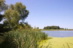 Los árboles y la hierba con el musgo verde cubrieron la charca fotos de archivo