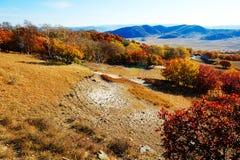 Los árboles y la ladera del otoño Fotos de archivo libres de regalías