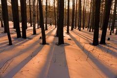Sombras en la nieve Foto de archivo libre de regalías