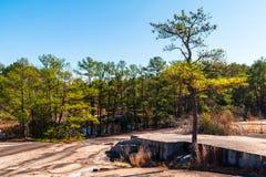 Los árboles y la tierra de piedra en Stone Mountain parquean, Georgia, los E.E.U.U. Imágenes de archivo libres de regalías