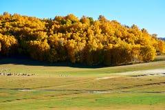 Los árboles y las ovejas amarillos en el prado Imagen de archivo libre de regalías