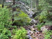 Los árboles y las plantas enormes alinean la corriente de la ladera de Mt Graham Foto de archivo libre de regalías