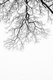 Los árboles y las ramas nevosos congelados en invierno de congelación ajardinan Imagen de archivo