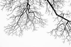 Los árboles y las ramas nevosos congelados en invierno de congelación ajardinan Fotos de archivo