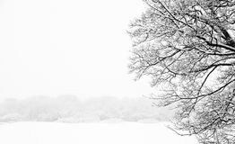 Los árboles y las ramas nevosos congelados en invierno de congelación ajardinan Foto de archivo libre de regalías