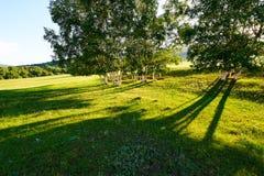Los árboles y las sombras en la puesta del sol de la estepa Imagenes de archivo