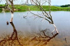 Los árboles y las sombras muertos en agua Imagen de archivo libre de regalías