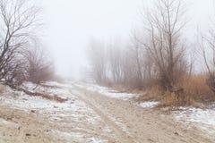 Los árboles y los arbustos en la niebla en un invierno varan Imagen de archivo