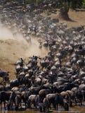 Los ñus están corriendo al río de Mara Gran migración kenia tanzania Masai Mara National Park Foto de archivo