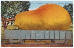 Los años 10 gigantes de los 1900s de la pera de las ilustraciones de la postal de la exageración del vintage Imagenes de archivo