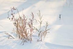 Los años pasados de hierba bajo cubierta de nieve 8297 Imágenes de archivo libres de regalías